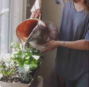 easiest herbs to grow at home