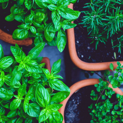 Best 3 Herbs You'll Want To Grow at Home